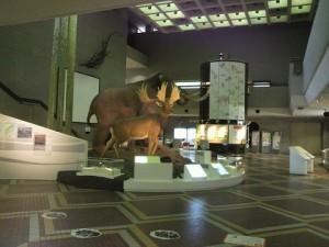 20130901自然史科学館展示