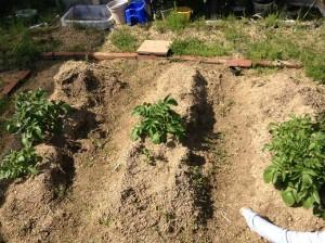 菜園0426