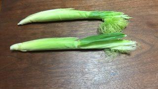 ヤングコーン収穫(7/8)