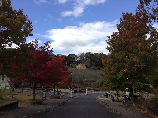 紅葉の生駒山麓公園