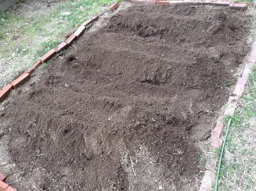 畝づくりとジャガイモ植付