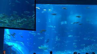 首里城と美ら海水族館(令和元年)