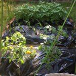 菜園の様子(令和3年5月下旬)